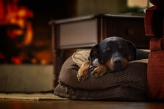 Chilldogz